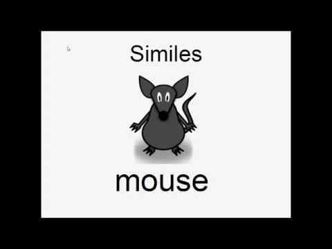 Learn English: Animal Similes