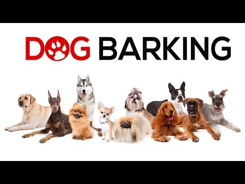 Dogs Barking  Sounds To Make Your Dog REACT | 34+ Breeds Including Yours
