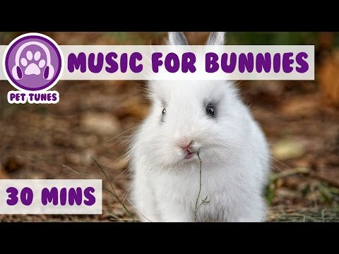 Music for Bunnies! Bunny Rabbit Music, Calm Your Rabbit with Relaxing Music