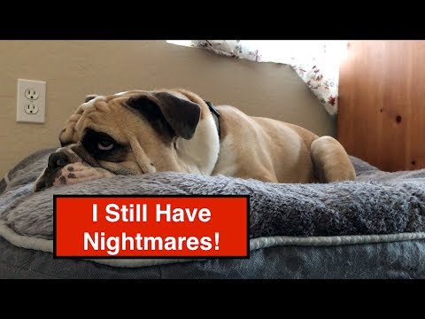Funny Bulldog - Scary Dog Encounter - Dozer Does Vlog 155 - A Bulldogs's Life - Bulldog Vlog