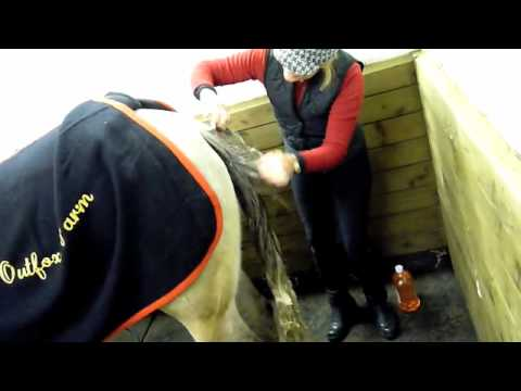 HORSES-Educational Video - Washing a Grey Horse