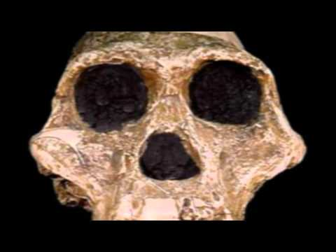 Creationist Lies About Lucy Revealed