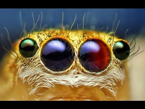 [Culture générale 1] Les araignées ne sont pas si horribles finalement...