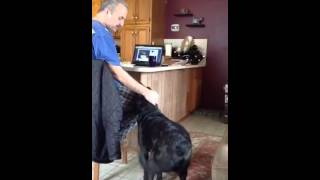 My rescue dog Luke howling with my dad. We think he's a Lab mixed w...