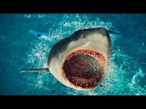 【扒界】一头12米长的大白鲨,误入超市,狂虐人类,开始为所欲为!