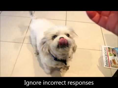 teach-your-dog-to-speak-and-be-quiet