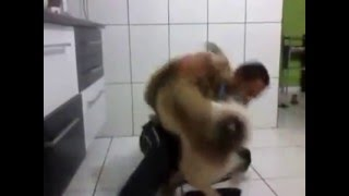 animal x dog