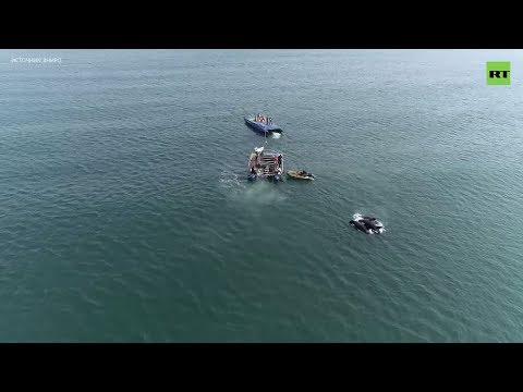 Освобождённые из «китовой тюрьмы» косатки попали на видео