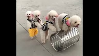 Cute cats and dogs compilation so funny