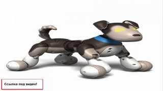 реклама детских игрушек видео(Продажа детских развивающих и интерактивных игрушек, товаров для детей, колясок,одежды и много другого,все..., 2015-01-28T15:58:15.000Z)