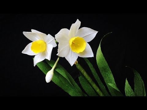 ABC TV   How To Make Daffodils Flower From Crepe Paper #2 - Craft Tutorial