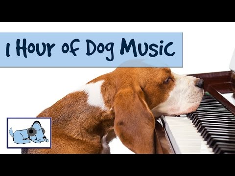 OVER 1 HOUR OF RELAXING DOG MUSIC! Music for Dogs; Stop Barking! Great for Crate Training  RMD02