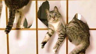 ПРИКОЛЫ С ЖИВОТНЫМИ Смешные Животные Собаки Смешные Коты Приколы с котами Забавные Животные 111