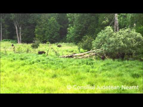 Parcul Natural Vânători Neamţ