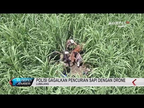 Polisi Gagalkan Pencurian Sapi Dengan Drone Mp3