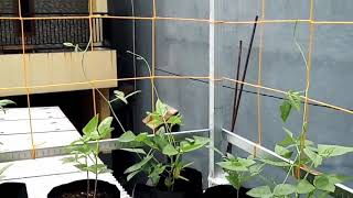Video Berkebun diatas atap download MP3, 3GP, MP4, WEBM, AVI, FLV Juni 2018