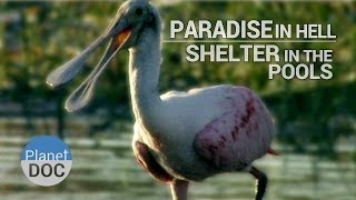 Paradise in Hell. Shelter in the Pools | Nature - Planet Doc Full Documentaries