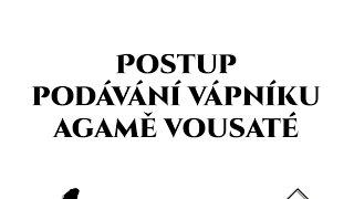 Agama vousatá - Základy chovu - Podávání vápníku - Agamky.eu