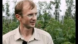 Правильная посадка малины. Выбор саженца(Видео подготовлено садовым центром Greensad по материалам передачи