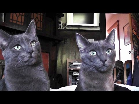 Monkey & Thunder - 5 Years Of Brotherly Cat Love
