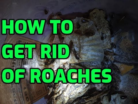 HOW TO GET RID OF ROACHES IN YOUR HOUSE KITCHEN BATHROOM OFFICE