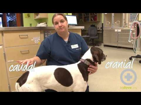 Directional Terms in Veterinary Medicine