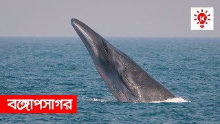 বঙ্গোপসাগর | কি কেন কিভাবে | Bay of Bengal | Ki Keno Kivabe