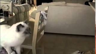 Cats Leap for Leap Year 2016 | funny cats doing stupid things | Most funny videos 2015 16
