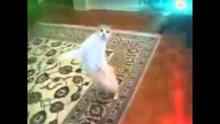 Котячие танцы   Опа гангам стаил