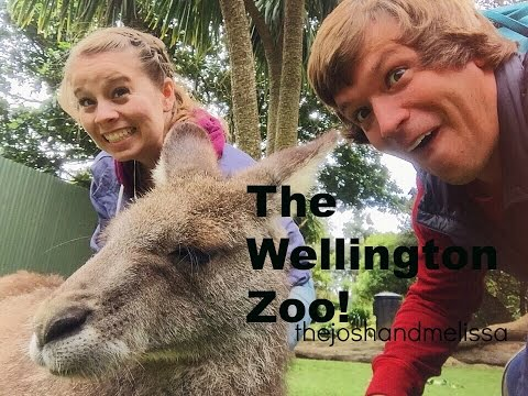 The WELLINGTON Zoo -  NEW ZEALAND!