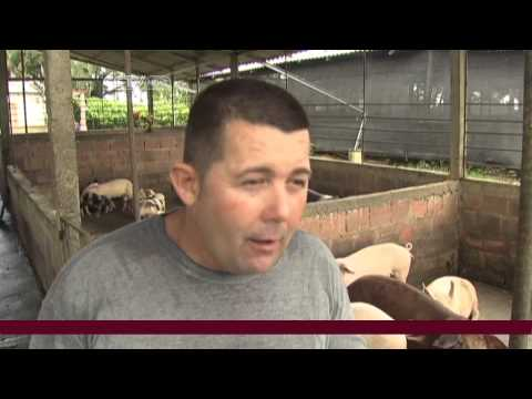Cuban Farmer Packages Biogas from Pig Manure
