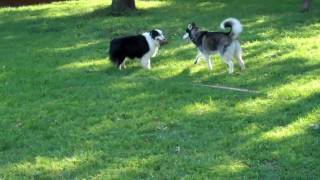 Zane, Josie, And Roxie | Redeeming Dogs | Fort Worth Dog Training