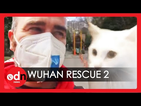Coronavirus Cat Rescue | Can Martin Save Cat from Wuhan Lockdown? (Part 2)