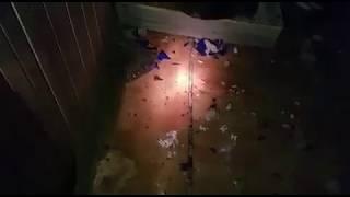 18+ Видео содержит сцены жестокого обращения с животными. Чёрная передержка Ирины Худаковой