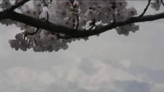 まほろば緑道(4) 飯豊連峰と桜並木