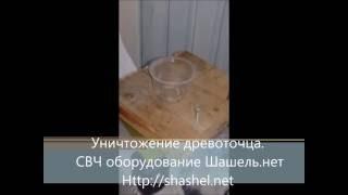 Как избавиться от жука-короеда в деревянном доме