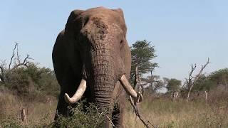 Borninfreedom, Krugerpark movie