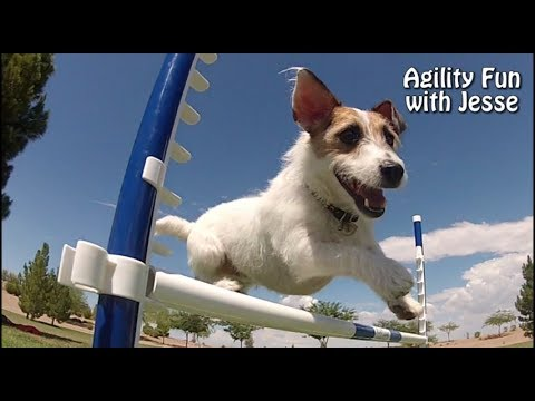 Agility Fun with Just Jesse the Jack