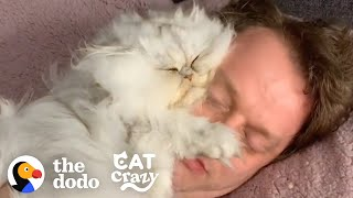 Guy Tucks His Cat Into His Own Little Bed Every Night | The Dodo Cat Crazy