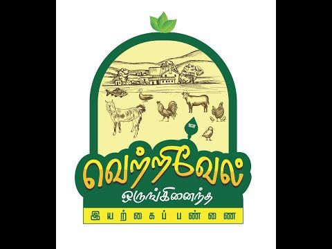 சேலம் கருப்பு கன்னி கொடி சினையாடுகள் மற்றும் இறைச்சி தேவைகளுக்கு விற்பனை l Salem Black  kanni  kodai