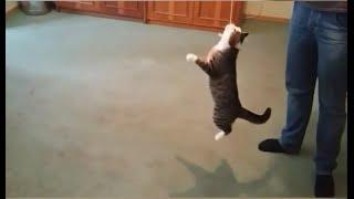 Когда кот в душе собака :) | Funny cat like a dog