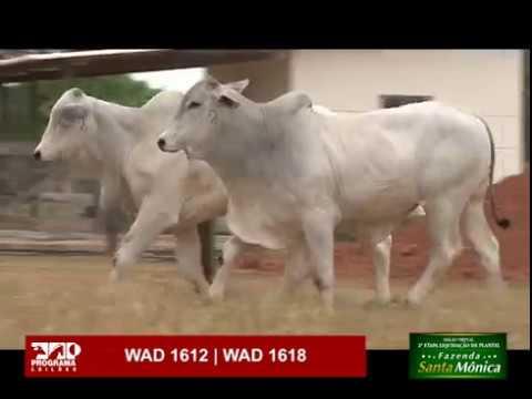 LOTE 66 - WAD 1612 | WAD 1618