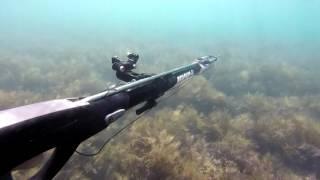 Подводная охота в черном море!(Подводная охота в черном море, осенью в засаде на Марусю! ссылка на видео: https://youtu.be/nKm-vyNpFyQ., 2016-09-29T16:26:22.000Z)