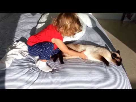 Siamese cat and baby