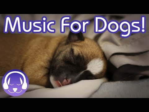 NEW! The BEST Relaxing Music for Dogs! The Ultimate Chillout Music for Dogs!