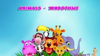 Animals Животные Первые слова для малышей 1-3 года Развивающее видео