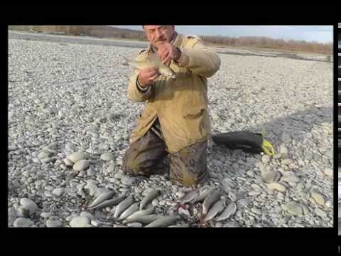 ловля тайменя на реке катунь
