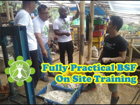 Fully practical BSFL on site training...FUN & Holistic