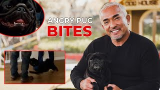 REACTING TO WHEN AN ANGRY PUG BIT ME! (featuring Gio!)