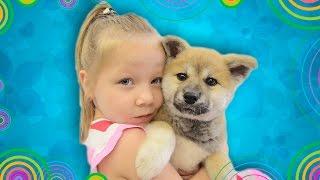 VLOG покупаем ЩЕНКА-ЛИСЕНКА, первые покупки для НЯШНОЙ СОБАКИ. BUY PUPPY-FOX 秋田犬